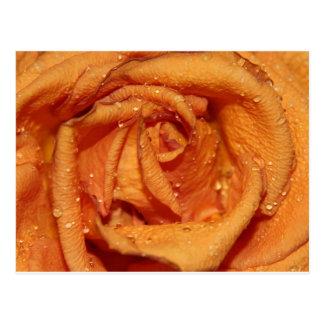 Orange Rose Dewdrops Postcards