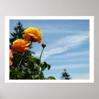 Orange Rose Flowers Garden Art Prints Blue Sky Poster