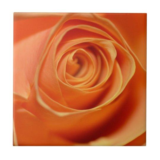 Orange rose in close up small square tile