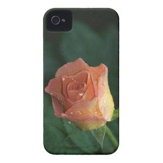Orange Rose iPhone 4 Case-Mate Case