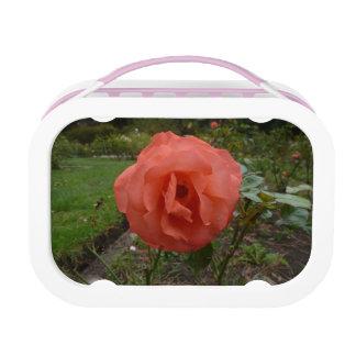 Orange Rose Lunch Box