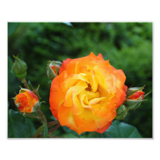 Orange Rose Meditation Photo Wall Decor