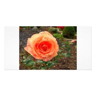 Orange Rose Personalized Photo Card