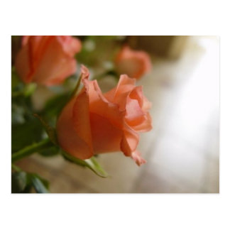 orange roses postcard