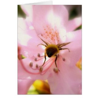 Orange Rumped Bumble Bee on Rhododendron Note Card
