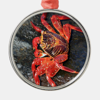 Orange sally lightfoot crab Galapagos Islands Christmas Ornament