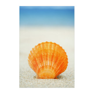 Orange Scallop Shell Standing Upright In Sand Acrylic Wall Art