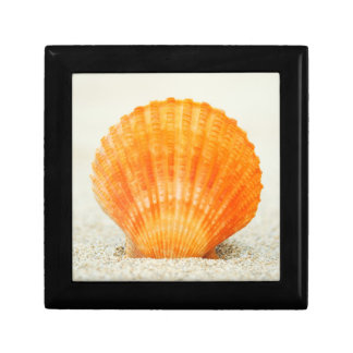 Orange Scallop Shell Standing Upright In Sand Small Square Gift Box