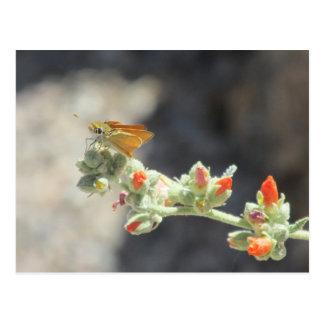 Orange Skipperling Butterfly Postcard