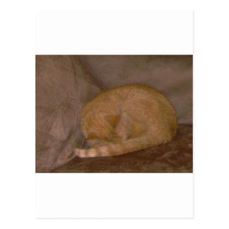 Orange striped cat cards tee clock ornament postcards