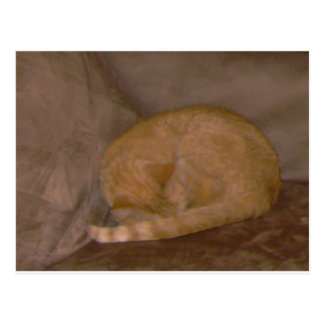 Orange striped  cat cards, tee, clock, ornament postcard