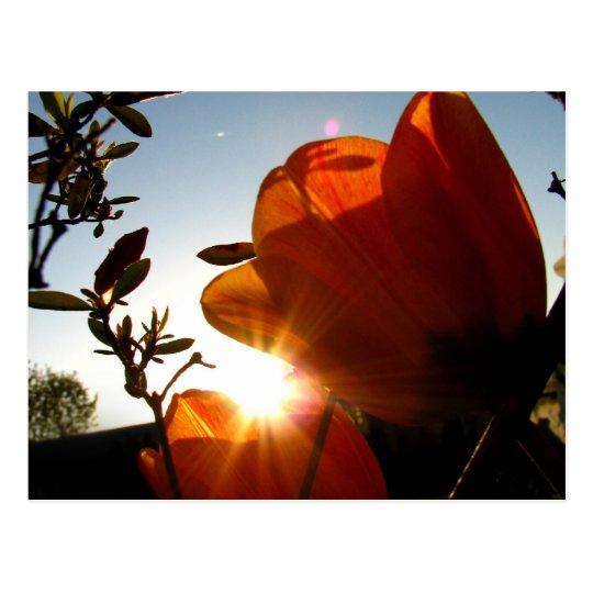 Orange Sun and Petals Postcard