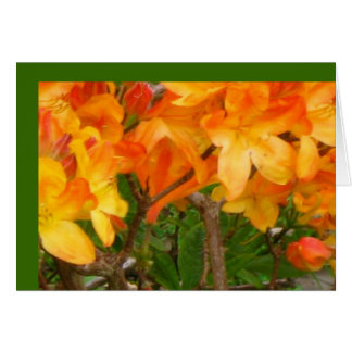 Orange Sunshine Delight Greeting Card