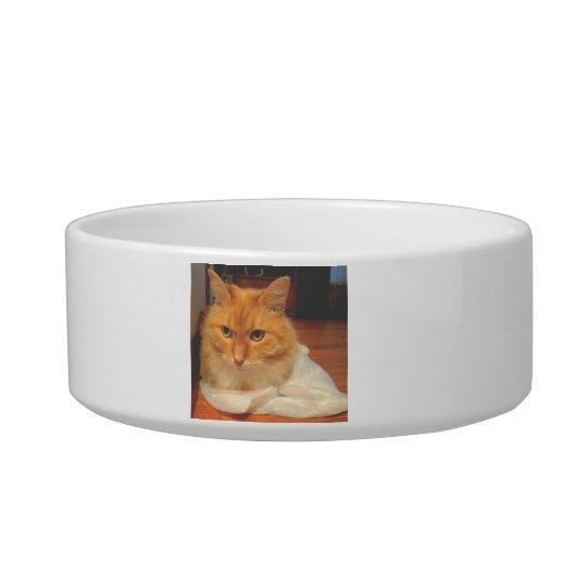 Orange Tabby Bowl