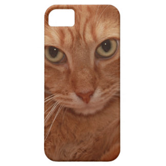 Orange Tabby Case For The iPhone 5
