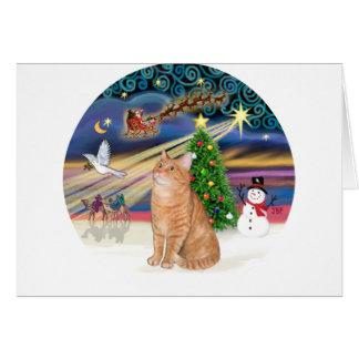 Orange Tabby Cat - Christmas Magic Card
