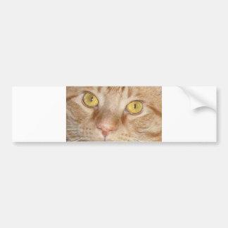 Orange Tabby Cat Eyes Bumper Stickers