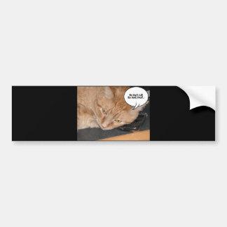 Orange Tabby Cat Humor Bumper Stickers