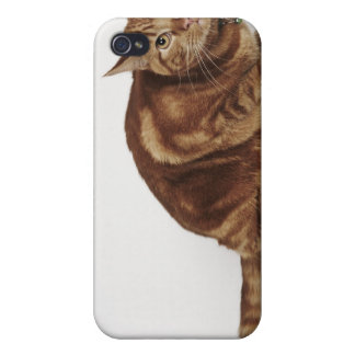 Orange Tabby cat iPhone 4/4S Cases
