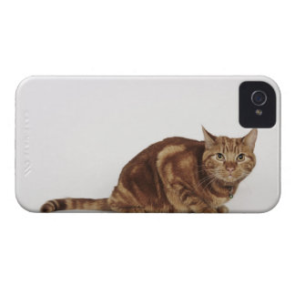 Orange Tabby cat iPhone 4 Case
