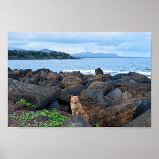 Orange Tabby Cat, Kauai, Hawaii Poster