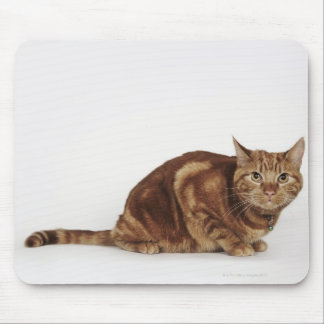 Orange Tabby cat Mouse Pad