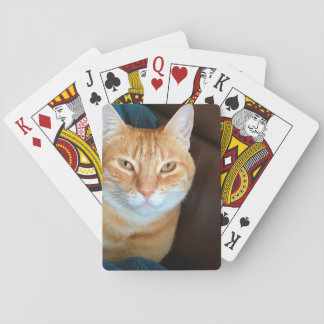 Orange tabby cat poker deck