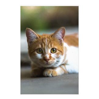 orange tabby cat portrait personalised stationery