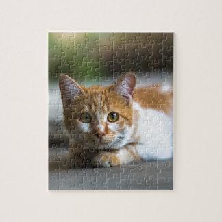 orange tabby cat portrait puzzle