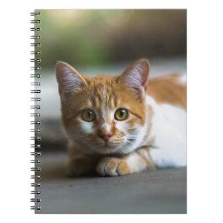 orange tabby cat portrait spiral notebook