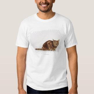 Orange Tabby cat T Shirts