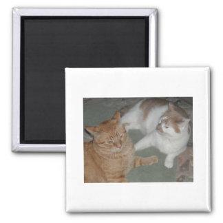 Orange Tabby Cats Magnet