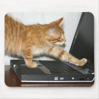 Orange tabby computer mouse mat