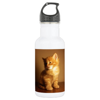 Orange Tabby Kitten 532 Ml Water Bottle