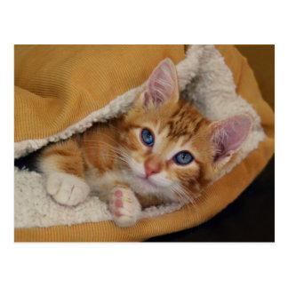 Orange Tabby Kitten in Bed Postcard