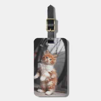 Orange Tabby Kitten Luggage Tag