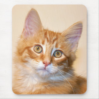 Orange tabby kitten mouse mat