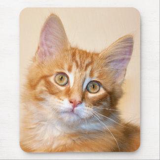 Orange tabby kitten mouse pad