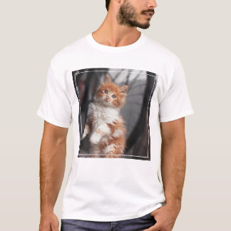 Orange Tabby Kitten T-Shirt