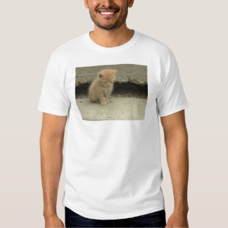 Orange Tabby Kitten Tee Shirt