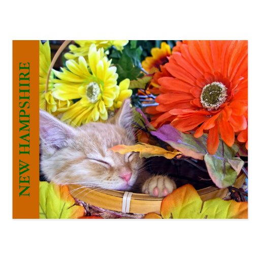 Orange Tabby Kitty Cat Napping, Flower Basket Post Cards