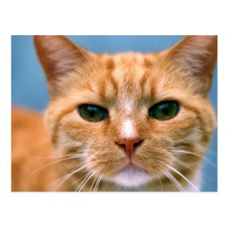 Orange Tabby Kitty Kitten Cat Postcard