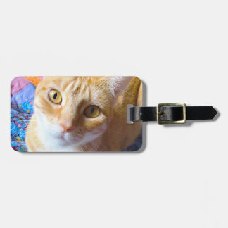 Orange tabby on quilt bag tag