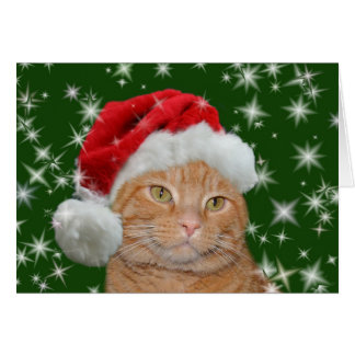 Orange tabby Santa Card