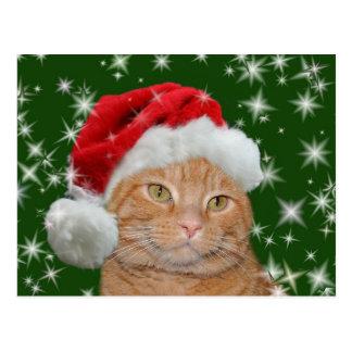 Orange tabby Santa Postcard