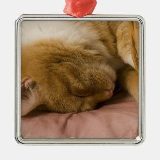 Orange tabby sleeping christmas ornament