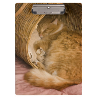 Orange tabby sleeping in hamper clipboard