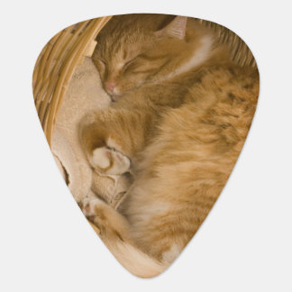 Orange tabby sleeping in hamper guitar pick