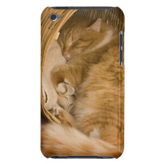 Orange tabby sleeping in hamper iPod touch cover