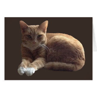 Orange tabby with white cat card